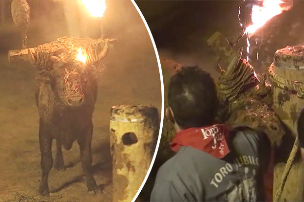 Spanish festival sets fire to bull in brutal annual tradition