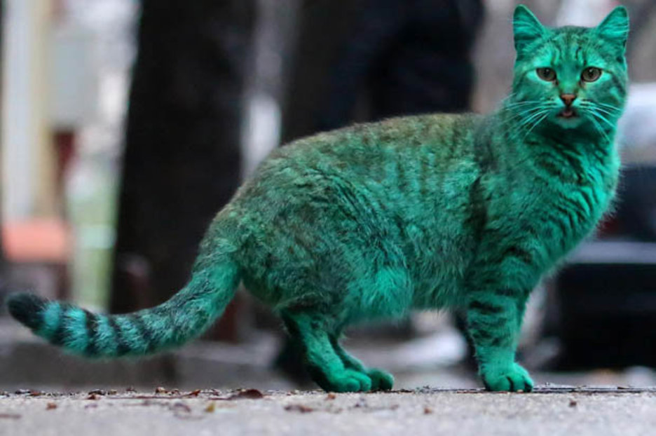 Varna Cat Goes Green And Its Not What You Might Fear