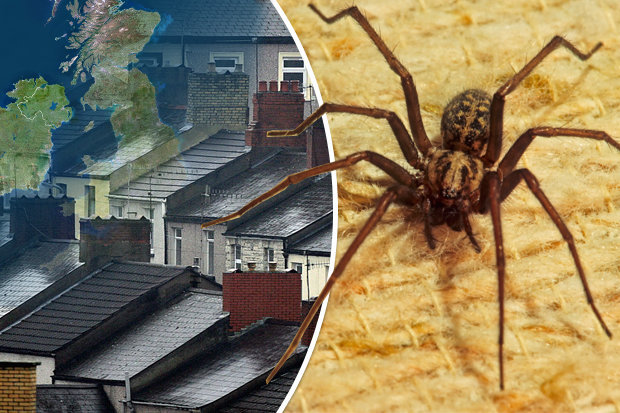 House spiders invading homes in Britain