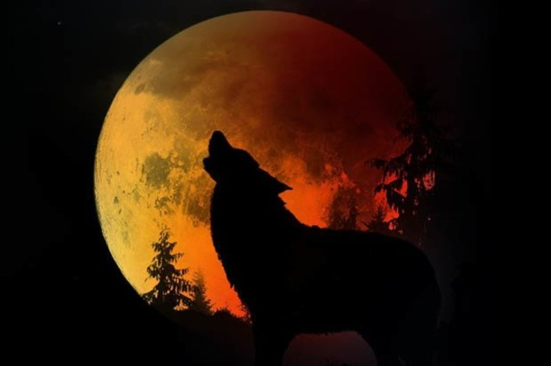 Super Blood Wolf Moon Uk How Will The Total Lunar Eclipse Affect You