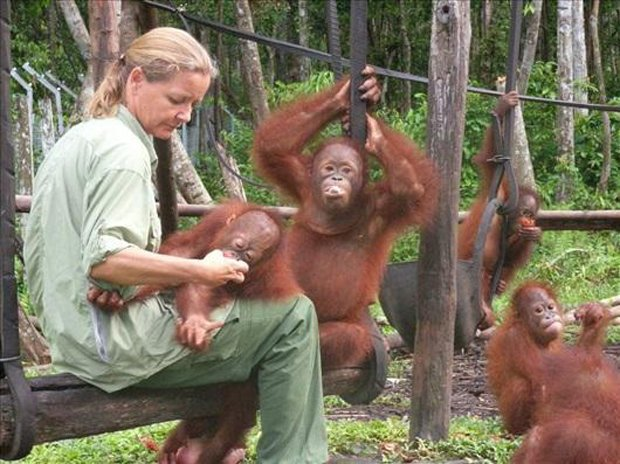 Orangutan Chained and Forced To Have Sex with Men