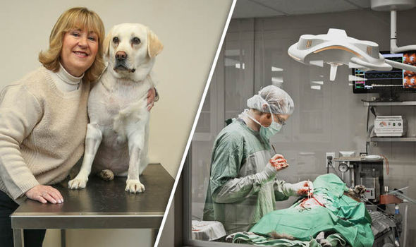 Mab the labrador with her owner - A veterinarian