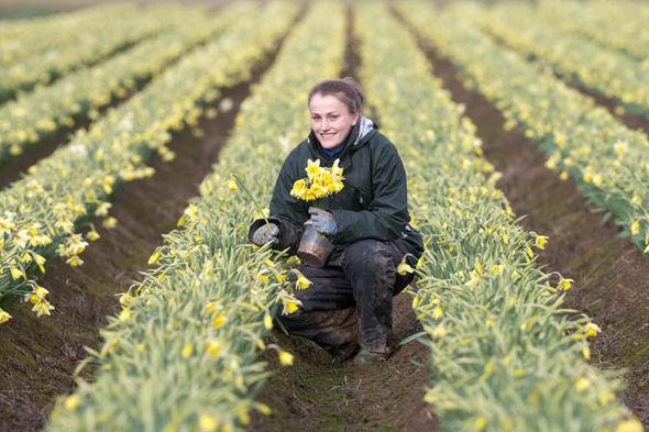 Natalia in holding daffodils