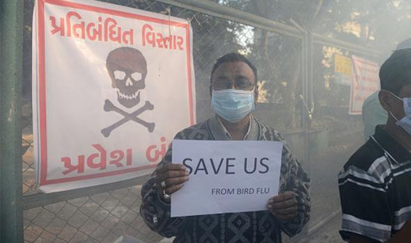 Bird flu humans