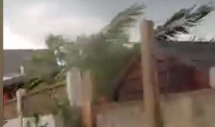 Watch as tornado rips through Barking, London – trees pulled from ground as locals panic