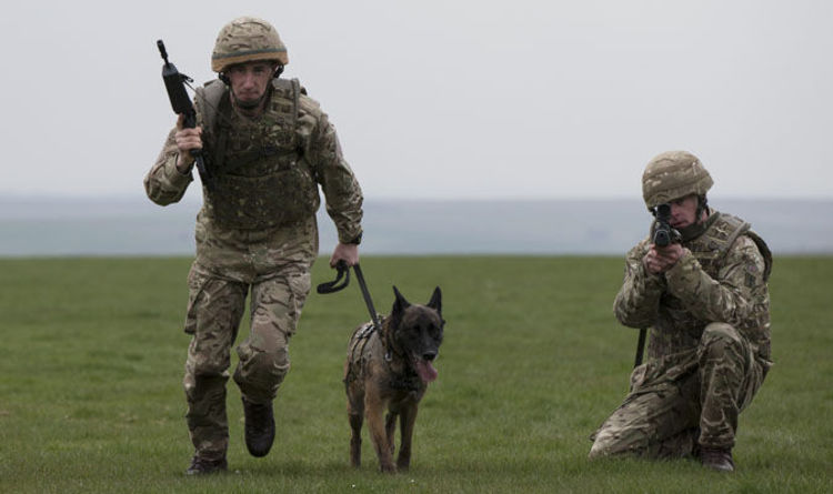 Fury As DOZENS Of Army War Hero Dogs PUT DOWN For Being
