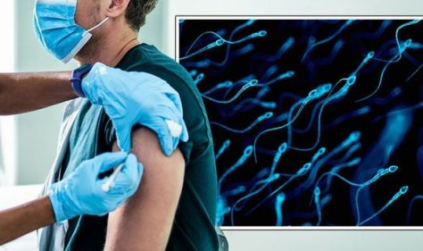 Covid vaccines: 'Reduced sperm quality' and quantity linked to coronavirus disease