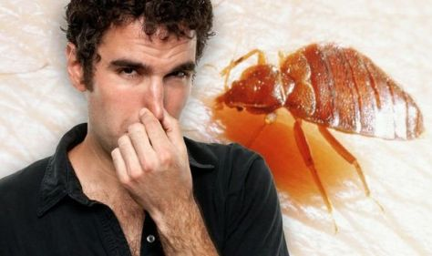 Bed bugs warning: Two key stinky signs of bed bugs - what does an infestation smell like?