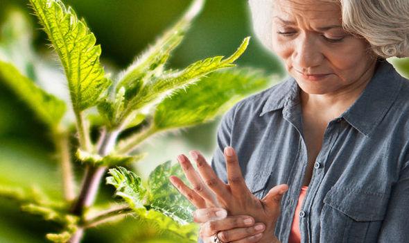 arthritis pain symptoms signs stinging nettles