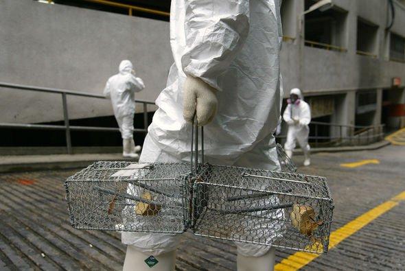 Bubonic plague: Rodent trap