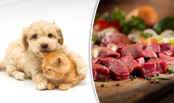 Raw Dynamic Cat Food For Dog