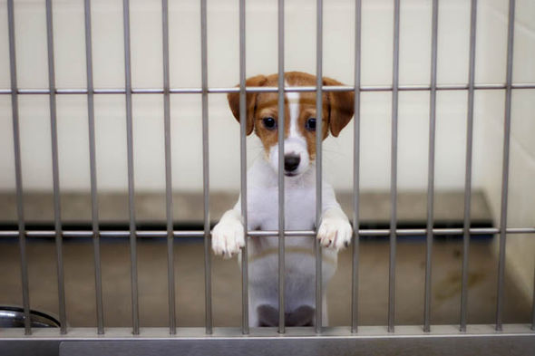 Sad puppy in a cage