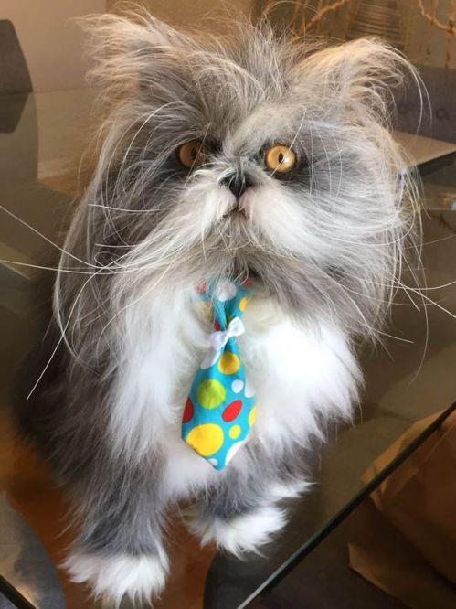 Atchoum the viral cat