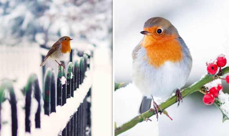 Waitrose Christmas Advert 2016 How Robins REALLY Get Home