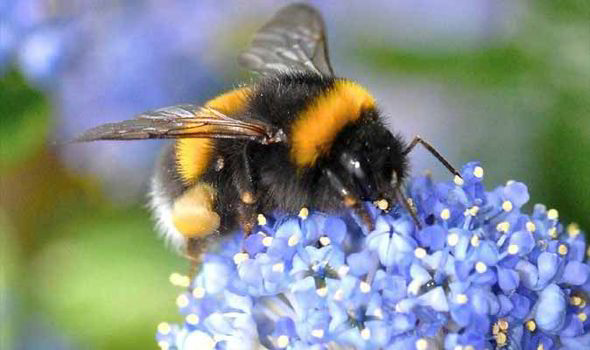 How To Attract Bees To Your Garden With Flowering Bulbs