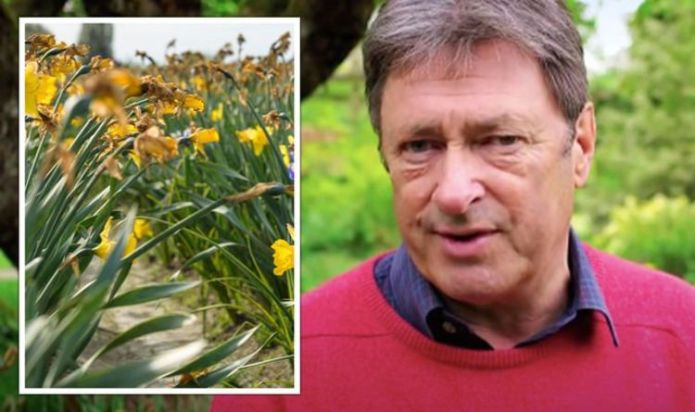 Alan Titchmarsh shares bulb care tips to 'guarantee daffodil flowers next year'