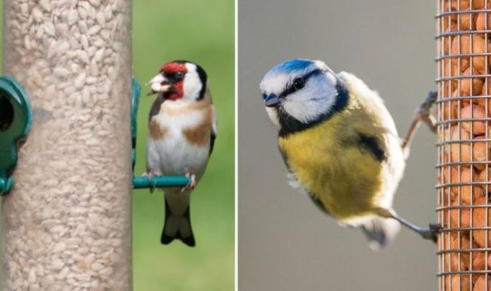 Gardening: How to attract birds to your garden and provide them shelter