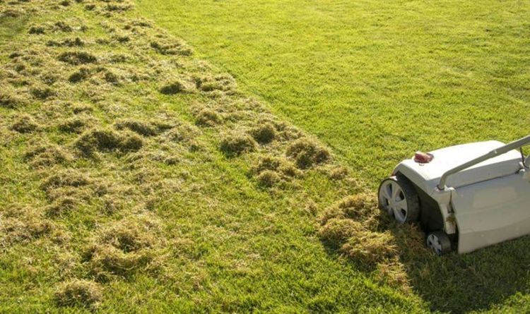 How to kill moss on your lawn - with baking soda
