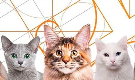 What is the most beautiful cat breed according to maths?