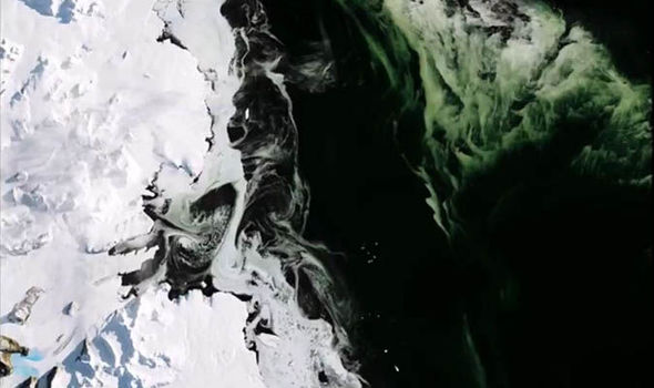 Green ice in the Antarctic