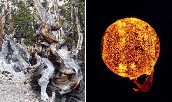 Tree rings - Sun