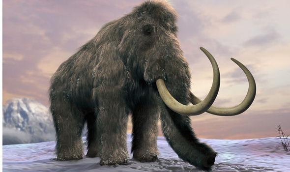 wolly mamut