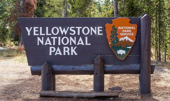 Yellowstone National Park: Bison in Yellowstone