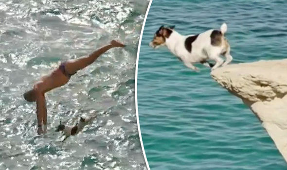 Secret Life of Dogs Cliff-diving dog Titti