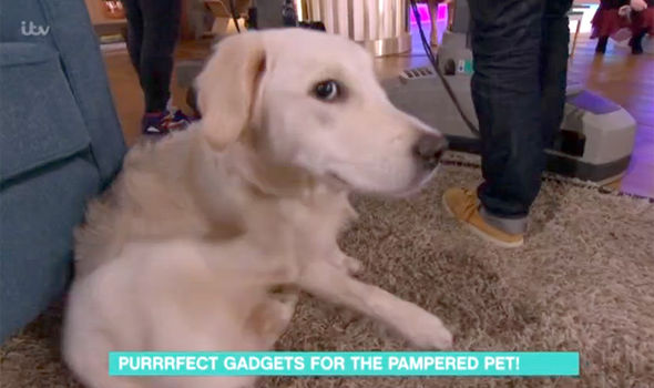 Naughty dog Poppy causes chaos on This Morning