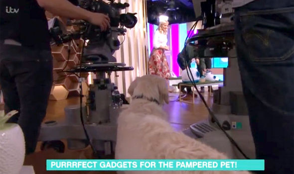 Holly Willoughby and Phillip Schofield call the dog in vain on This Morning