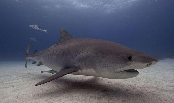 paradise beach requin
