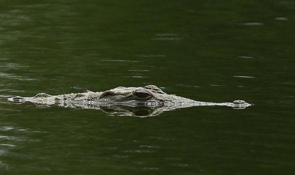Crocodile attack Zimbabwe