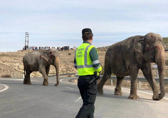 Injured elephants