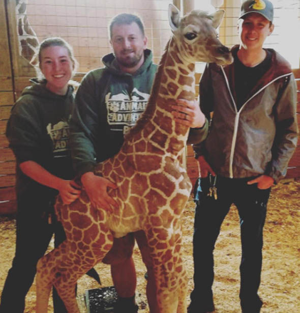 Giraffe calf with Jordan Patch