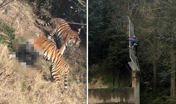 The man was seen climbing into the enclosure before the tragedy