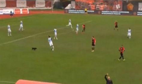 Dog storms Premier League football match and puts players to shame