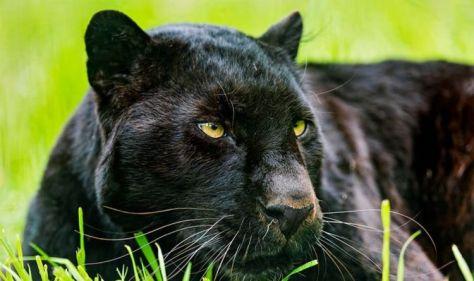 Big cat 'sighting': Fisherman stunned by suspected beast roaming near lake