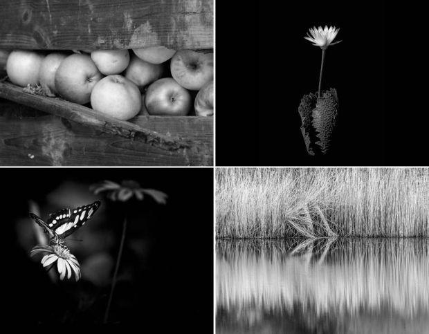 International Garden Photographer of the Year 2016
