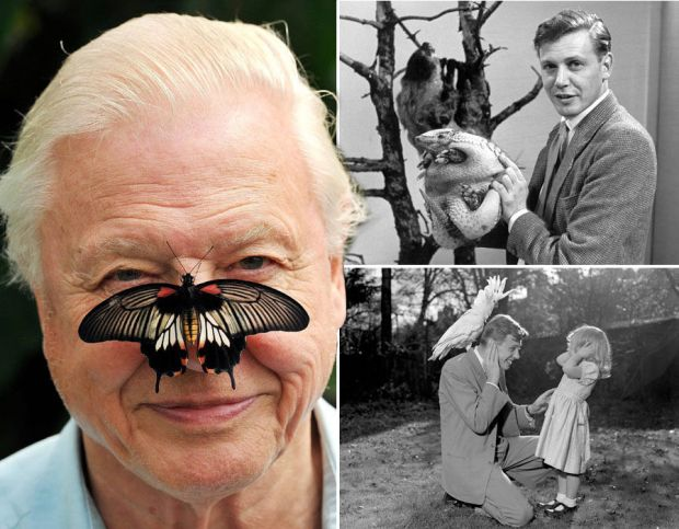 Sir David Attenborough turns 90