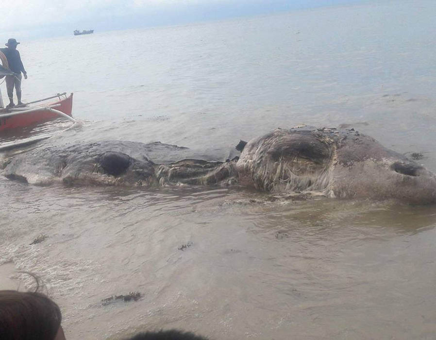 This mysterious decaying sea creature could not be identified by authorities   Friday 13th APOCALYPSE WARNING: Asteroid flyby 'marks the return of Mother Mary' | Weird | News 290738