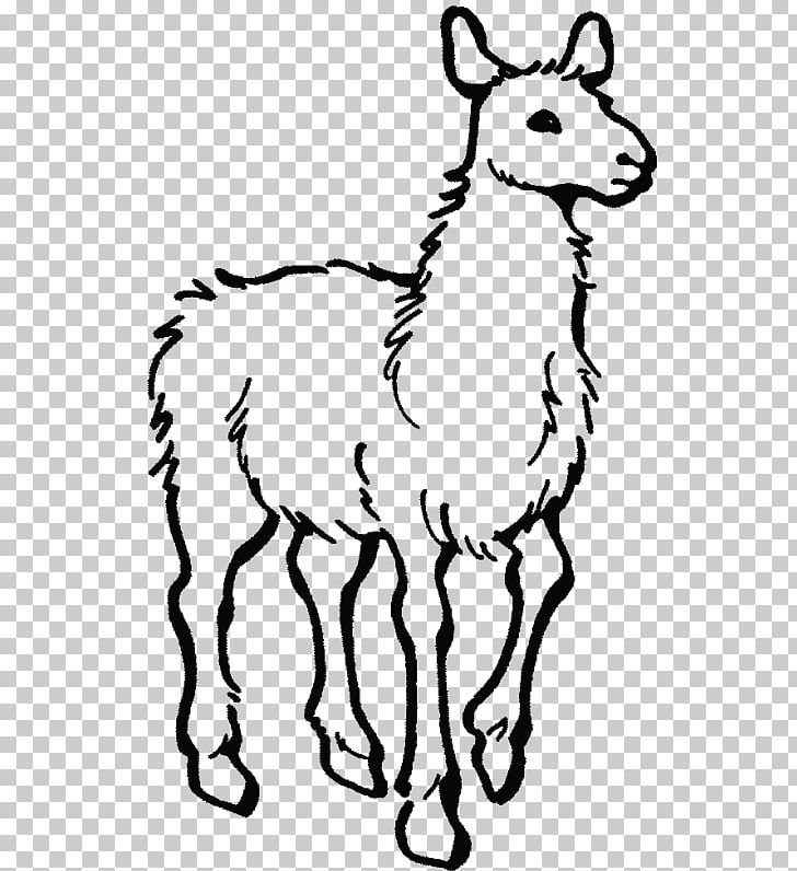 Alpaca Colouring Pages Llama Llama Home With Mama Coloring Book Png Clipart Adult Alpaca Ani Animal