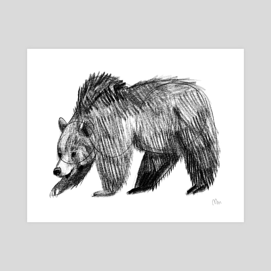 Grizzly Bear Pencil Sketch White Background An Art Print By Mattie Mastrorocco Inprnt