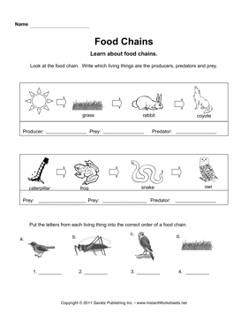 Food Chains Instant Worksheets