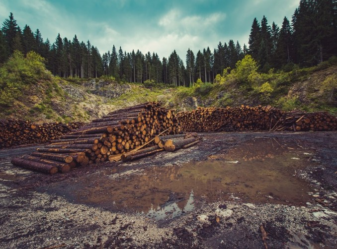 cleared wood area
