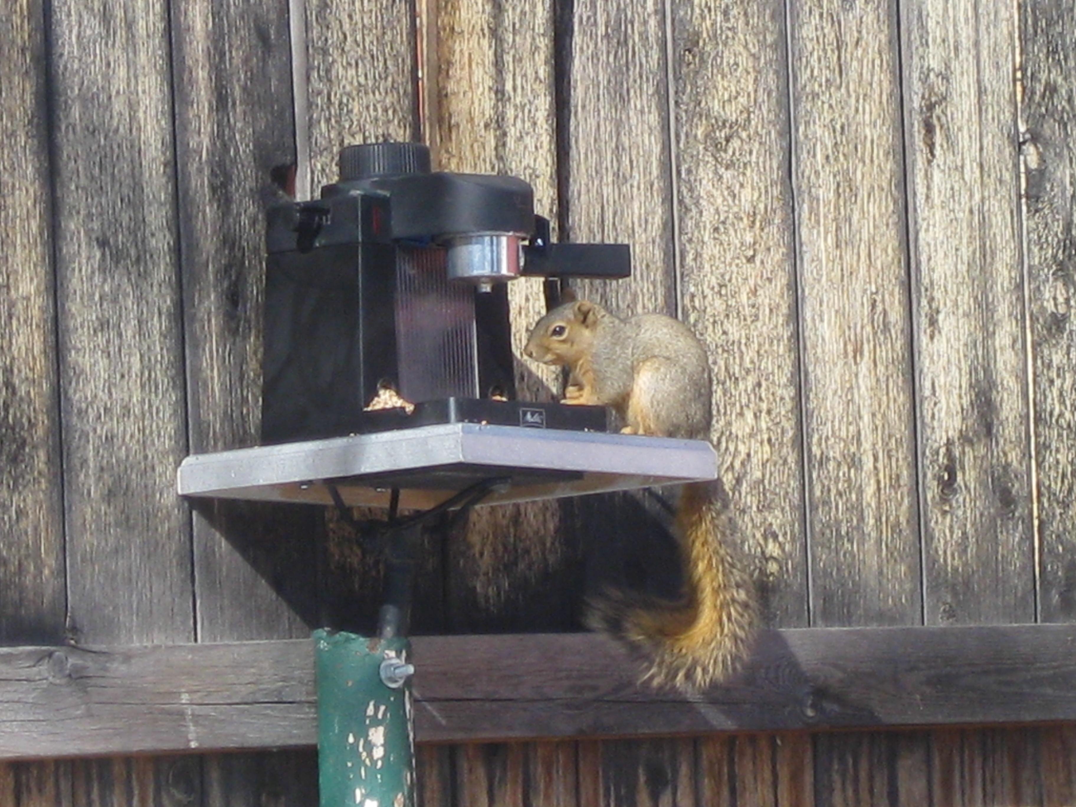 Espresso Bird Squirrel Feeder