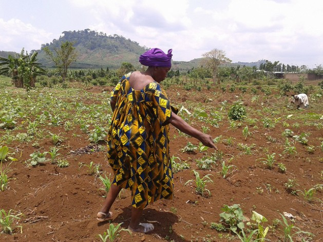 "Small farmers - like Ndomi Magareth, planting beans here on her land in Cameroon - ""are losing land at a tremendous rate. It's a land reform movement in reverse,"" says GRAIN's Henk Hobbelink. Credit: Monde Kingsley Nfor/IPS"
