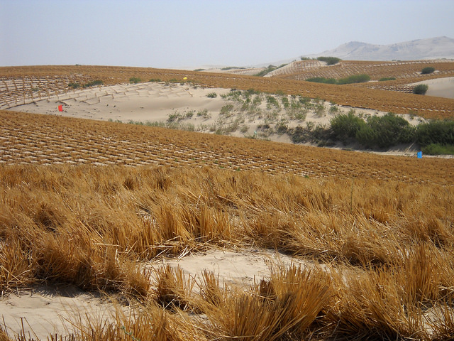 Desertification, the silent, invisible crisis, threatens one-third of global land area. This photo taken in 2013 records efforts to green portions of the Kubuqi Desert, the seventh largest in China. Credit: Manipadma Jena/IPS