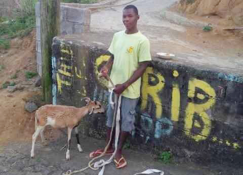 Romario Toby Pose With The Sheep Bought For Him By The Ulp Group In New York. (Photo: Ulp Abroad/Facebook)