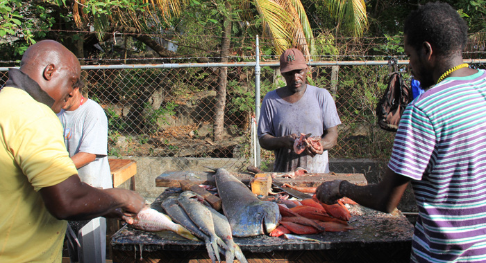 Fish Is Processed For Sale At The Calliaqua Fisheries Complex During Fisherman's Day Celebrations On Monday. (Iwn Photo)