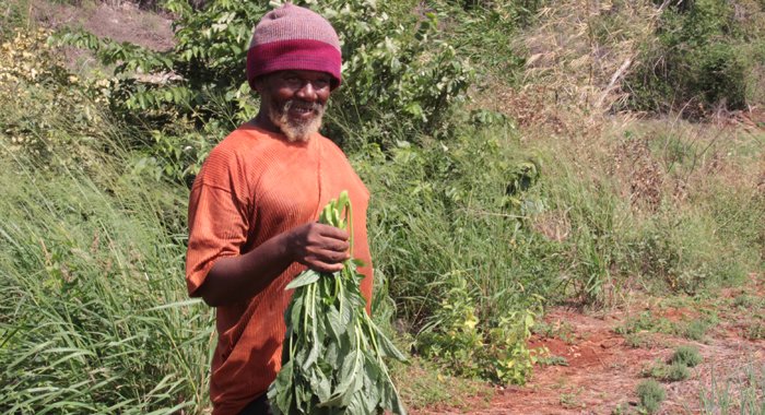 Farmer Alvin Findlay Praises The Operation Of The Agro-Park. (Iwn Photo)